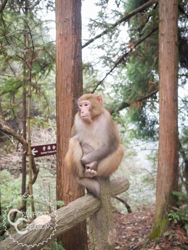huangshizhai-monkey