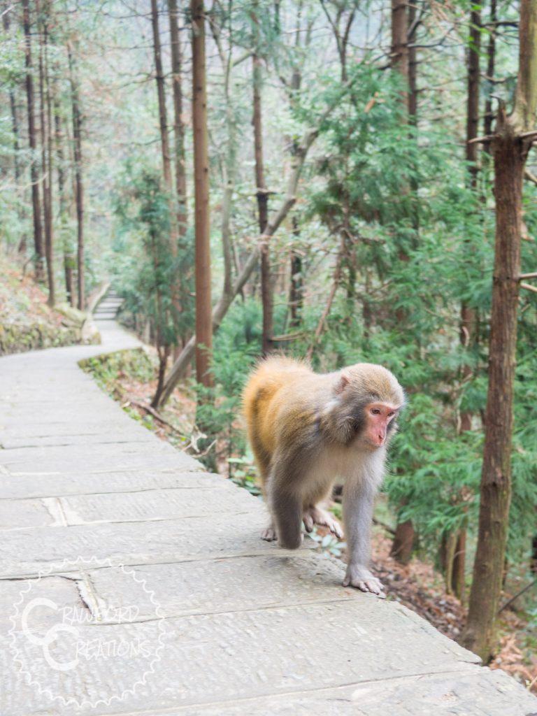 zhangjiajie-monkey